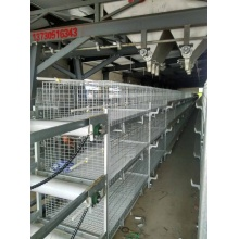 Full Automatic Broiler Cage System with ISO9001