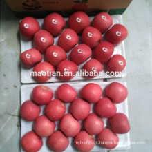 Fruta fresca da Maçã Fuji Vermelha
