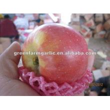 Marché de gros fruits biologiques meilleur prix pomme de fuji