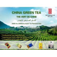 chá verde china o vert de chine