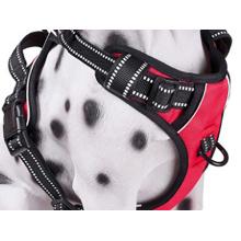 Harnais pour chien de haute qualité de marque Kaatapet