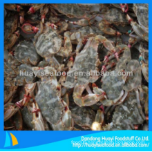 cheap frozen mud crab with premium quality