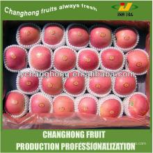 China Großhandel Karton 10kg Apple