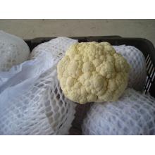Nueva coliflor de buena calidad para la exportación