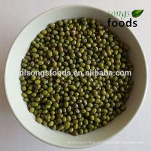 Feijão verde da colheita nova de China