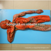 Modelo del Sistema Vascular ISO, Modelo Anatómico del Sistema Linfático