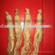 poudre de ginseng extrait de ginseng de panax 4% à 95%