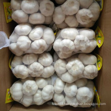 New Crop Top Quality Chinese Garlic