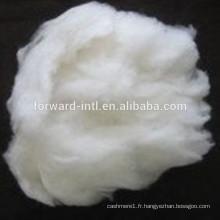 Vente directe usine de fibre de cachemire avec bonne longueur