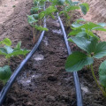 Drip Pipe For Greenhouse  Irrigation System