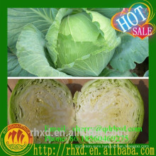 Green Cabbage Wholesale Fresh Red Cabbage