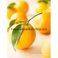 Pectine Citrus Haute Qualité
