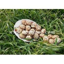 Usine de champignons Shiitake en fleurs séchées
