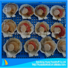 yummy frozen half shell scallop fresh seafood