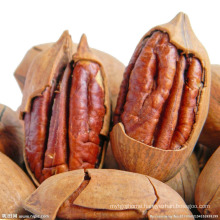 wholesale pecan nut for sale
