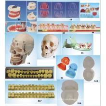 Equipo de Educación Científica Oral Modelo de Enfermedad Periodontal Modelo Dental