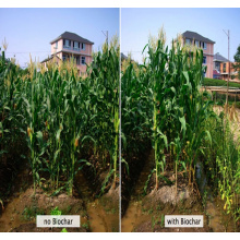 Organic fertilizer granular state increase production