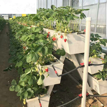Saluran Hydroponics Strawberry Gully Komersial