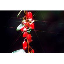 Ningxia Goji Berry Fruit