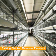 Cage de pondération automatique d'oeufs de poulet galvanisés en acier de type H
