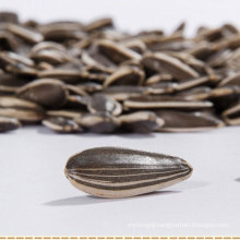 China sunflower seeds with a low price for export