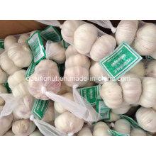 Китай Нормальная белая коробка чеснока 3p / 10kg (5.0-5.5-6.0cm)