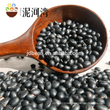 Professional Maufacture of Black Bean Yellow Kernel With Big Size