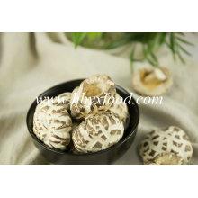Champignon de fleur blanche de produit agricole de qualité