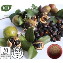 Extrait de graines Natrual Camellia Oleifera Tea Saponins 90% pour soins de la peau