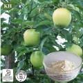 Extrait cosmétique naturel de racine de pomme de Phloretin 98% d'ingrédient