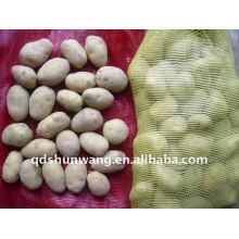 Frische Kartoffel