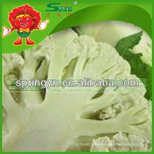 Verduras verdes orgánicas coliflor fresco de Yunnan