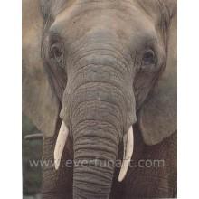 Pintura a óleo Canvas do elefante