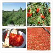 2016 ventas calientes a granel níspero orgánico NINGXIA bayas de goji secas