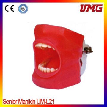 Dental Removable Teeth Dental Study Model for Train Students