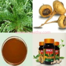 Capillary Wormwood Herb Extract Artemisia Capillaris Thunb