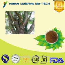 Natürliches Salicin / Salix Alba / White Willow Bark Extrakt