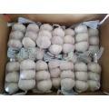New Crop Fresh Garlic Mesh Bag Packing
