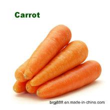 Carottes fraîches et carottes fraîches