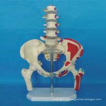Anatomia humana modelo de esqueleto etiquetado para ensino (R020802)