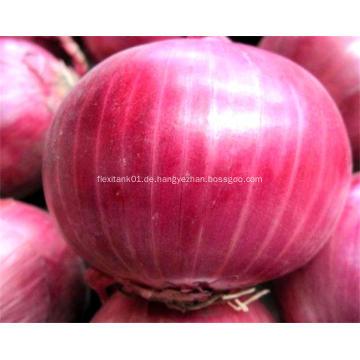Organische frische rote Zwiebel des Großverkaufs