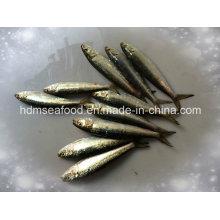 Hochwertige Fisch Kleine Größe Gefrorene Sardine für Bait (Sardinella aurita)