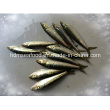 Poisson de haute qualité Petite taille de sardine congelée pour l'appât (Sardinella aurita)