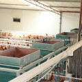 Poultry chicken laying cage system with automatic feeding system
