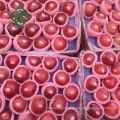 china red fuji apple delicious fuji apple