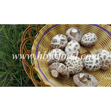Dried White Flower Shiitake Mushroom Prices