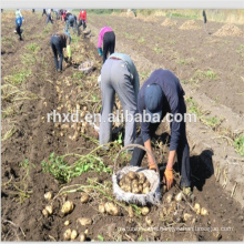 Fresh wholesale potatoes with low prices