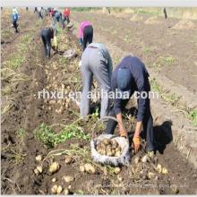 Batatas frescas por atacado com preços baixos