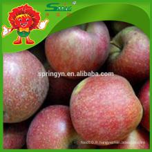 Pomme de pomme de pomme ronde Apple Fuji en vente