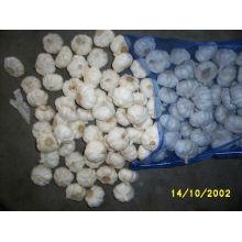 chinese garlic loose packing fresh white garlic
